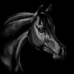 Arab horse. Graphic, hand-drawn black and white portrait of a horse's head on a black background.
