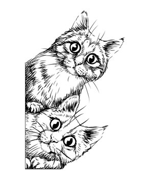 Wall sticker. Graphic, black and white hand-drawn sketch depicting two cute cats looking around the corner.