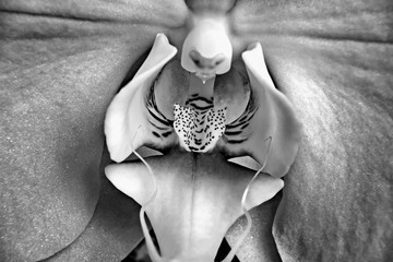 phalaenopsis orchid flower with sparks