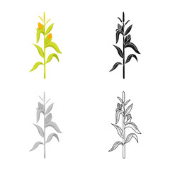 Isolated object of corn and stalk logo. Set of corn and field stock symbol for web.