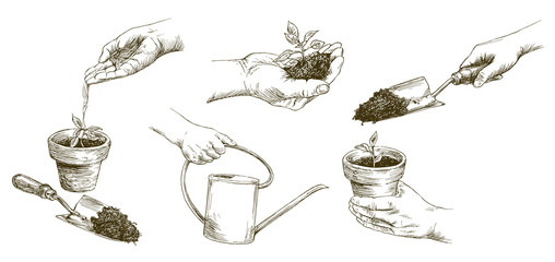 Growing plants. Plant seedling. Hand watering young plants. Hand drawn set.
