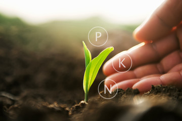 plant growing with hand and digital mineral icon. agriculture concept