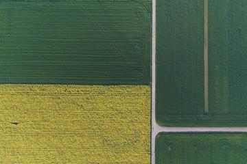 Aufsicht: Feldweg-Kreuzung, Rapsfeld und Getreidefelder