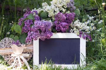 Flieder mit Tafel im Frühling