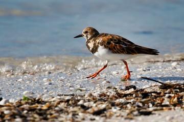 Vogel am Strand in Florida