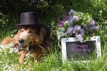 """Tafel mit Text""""Happy Birthday"""" und Hund mit Zylinder und Fliege"""