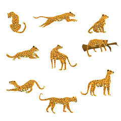 Set of leopards in various poses cute trend style, animal predator mammal, jungle
