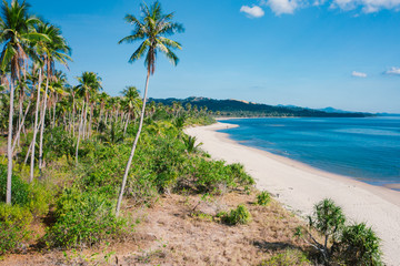 Amazing tropical beach with palm trees in Philippines