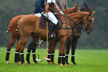 Three polo horses with riders standing on a field in the rain.