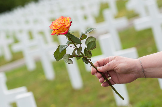closeup of orange rose in hand of woman at military cemetery