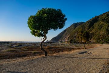 tree coast