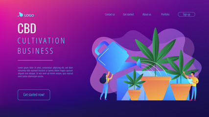 Farmers with watering can growing cannabis in pots. Cannabis cultivation, CBD cultivation business, sungrown indoors or greenhouse concept. Website vibrant violet landing web page template.