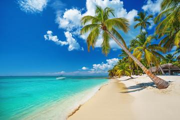 Palm and tropical beach in Punta Cana, Dominican Republic Wall mural