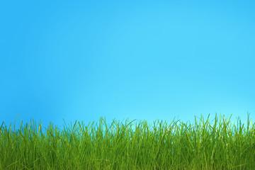 Trawa zielona na niebieskim tle.