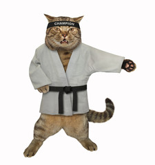 The cat karate fighter in a kimono with a black belt and headband is making exercises. White background. Isolated.