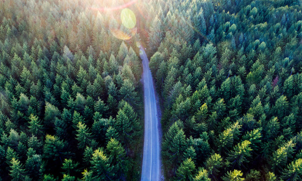 Top view of dark green forest landscape in winter. Aerial nature scene of pine trees and asphalt road.
