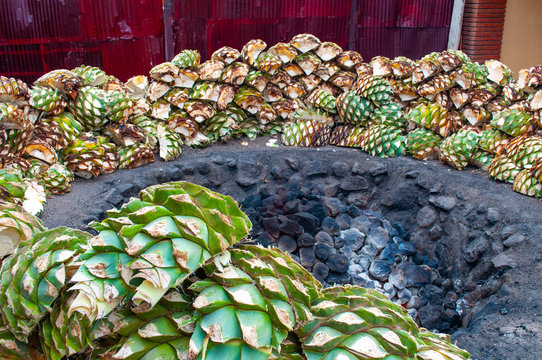 Baking blue agave hearts in ground oven pit, tequila factory
