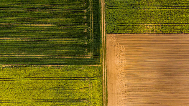 Yellow rape fields and plow soil, aerial drone view