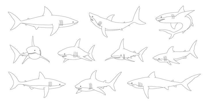 shark line