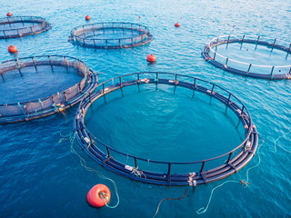 Salmon fish farm aquaculture blue water. Aerial top view