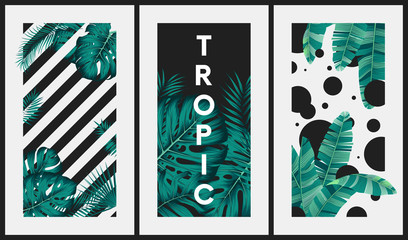 Wall Mural - Creative images with tropical leaves on the background of stripes and circles, Illustration for surface invitation, banner, poster, postcards