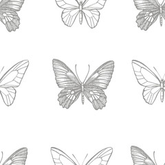 Butterflies silhouettes. Butterfly icons isolated on white background. Graphic illustration. Seamless patterns.