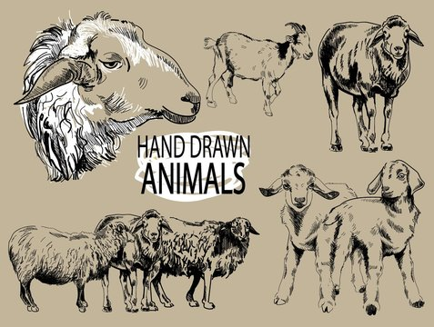 Image set farm animals. Sheep and goats. Vintage style images, vintage images. Freehand drawing.