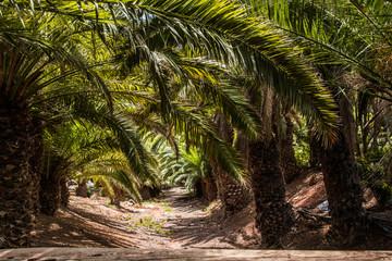 Fototapeta palmy