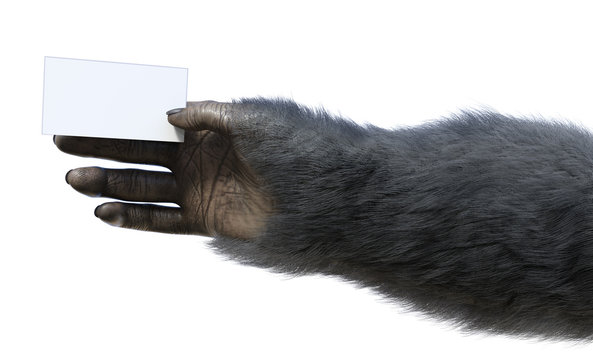Chimp Hand Holding Business Card
