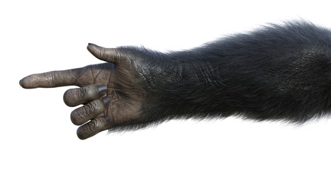 Chimp Hand Pointing