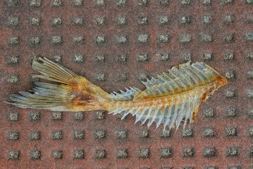 one fishbone debris with a tail lies on a brown table