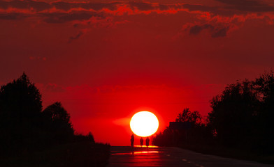 Deurstickers Rood paars Solar disk and silhouettes of trees against the background of the red sunset sky