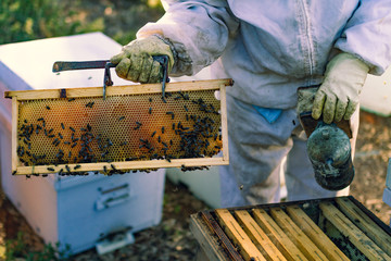 bees and hive with honey