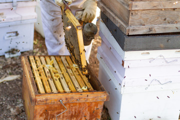 woman in a suit for bees