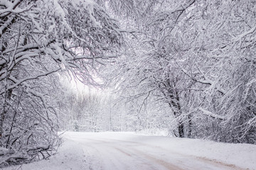 Winter snowy road. Branches of snowy trees hang over the road. Winter landscape. Journey in the winter. Fotoväggar