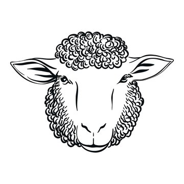 black and white drawing of sheep head full face