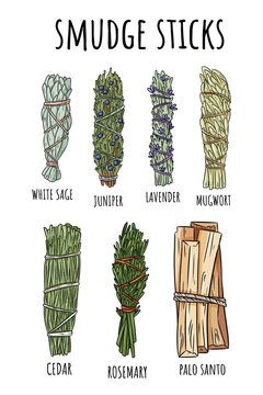 Sage smudge sticks hand-drawn set of doodles. Herb bundles collection