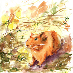 Pets, guinea pig. Drawing with watercolor for the design of the background, print, banner, advertising, ads, books