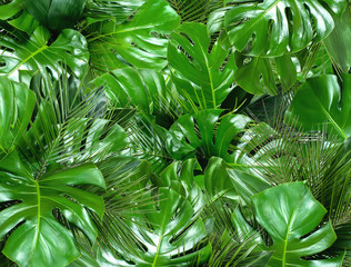 Green tropical background. Close up of bouquets of various fresh leaves. Design template. Top view, flat lay
