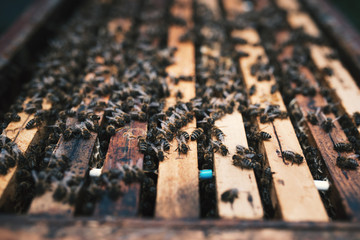 Detail on a honey on honeycombs. Concept of beekeeping
