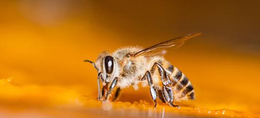 Macro shot of bees Sweet drink