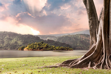 Spoed Foto op Canvas Chocoladebruin Tree landscape with trunk and roots spreading out beautiful on grass green with mountains and river nature background with clouds sun shines through rays of light in the illuminated picturesque sky.