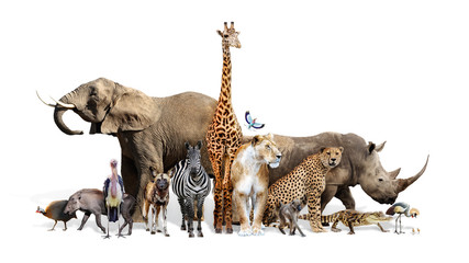 Fototapete - Safari Wildlife Group on White