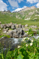 VERTICAL CLOSE UP: Beautiful shot of flowers growing by the mountain stream.