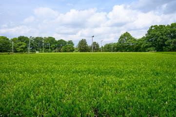 Foto op Plexiglas Pistache 狭山の茶畑