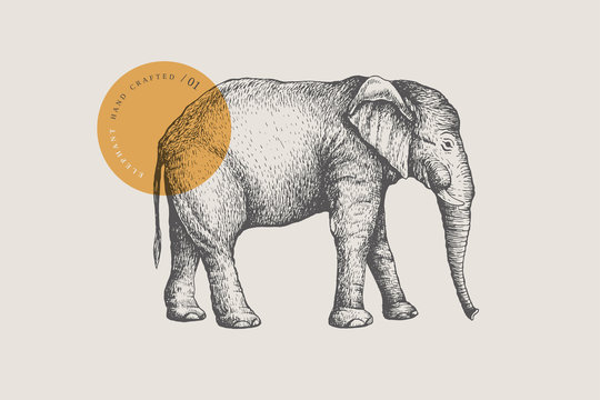 Image of a large African elephant, drawn by graphic lines on a light background. Vector illustration in engraving style.