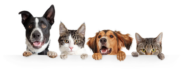 Spoed Fotobehang Kat Cats and Dogs Peeking Over White Web Banner