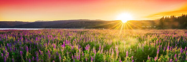 Sunset over field with wild flowers