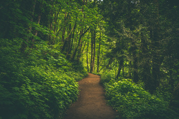 Path through vibrant lush green Pacific Northwest summer forest Wall mural
