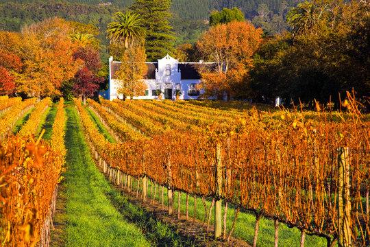 Wine tour, Constantia, Cape Town